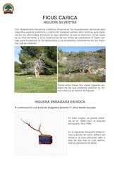 Documento PDF ficus carica bonsai