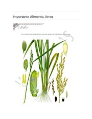 Documento PDF arroz alimento importante