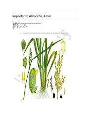 Documento PDF arroz alimento importante