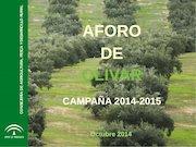 Documento PDF aforo de olivar campana 2014 2015 de la junta de andalucia